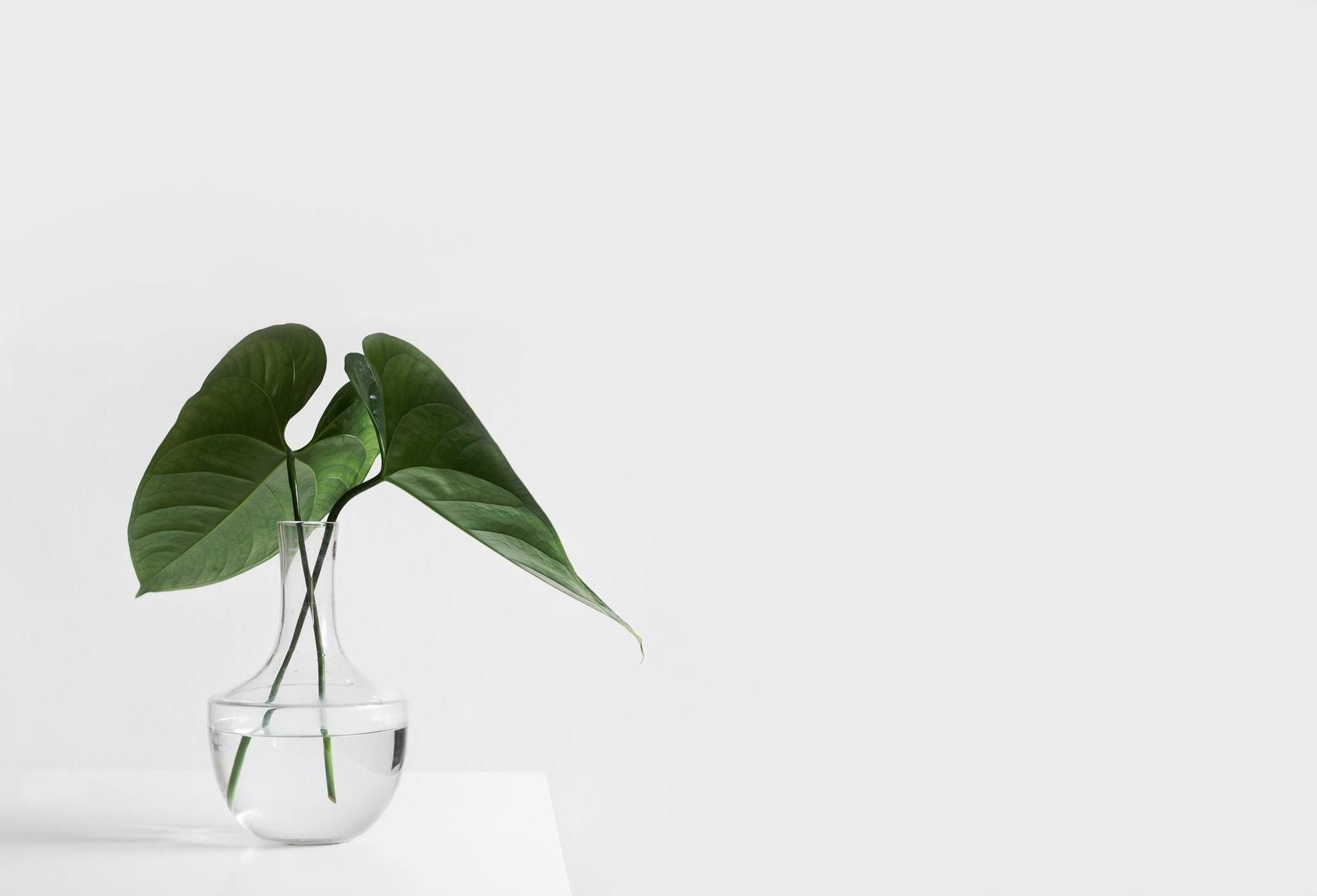 hunterand blog why we dont pitch plant office